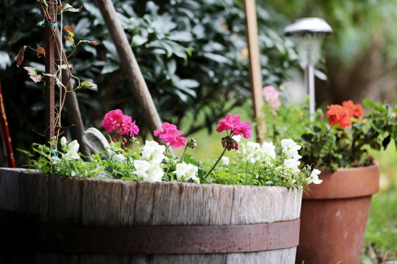 http-www-lifeofpix-com-wp-content-uploads-2016-11-life-of-pix-free-stock-flowerpot-plant-greenery-leeroy