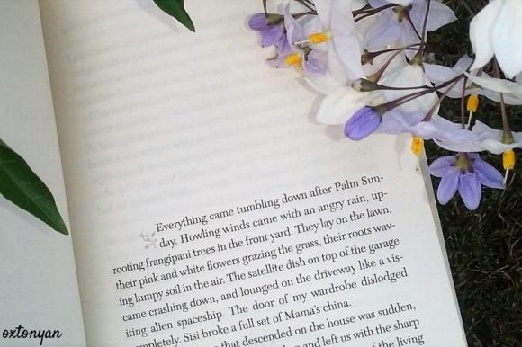 hibiscus-pourpre-chimamanda-ngozi-adichie-avis (5)
